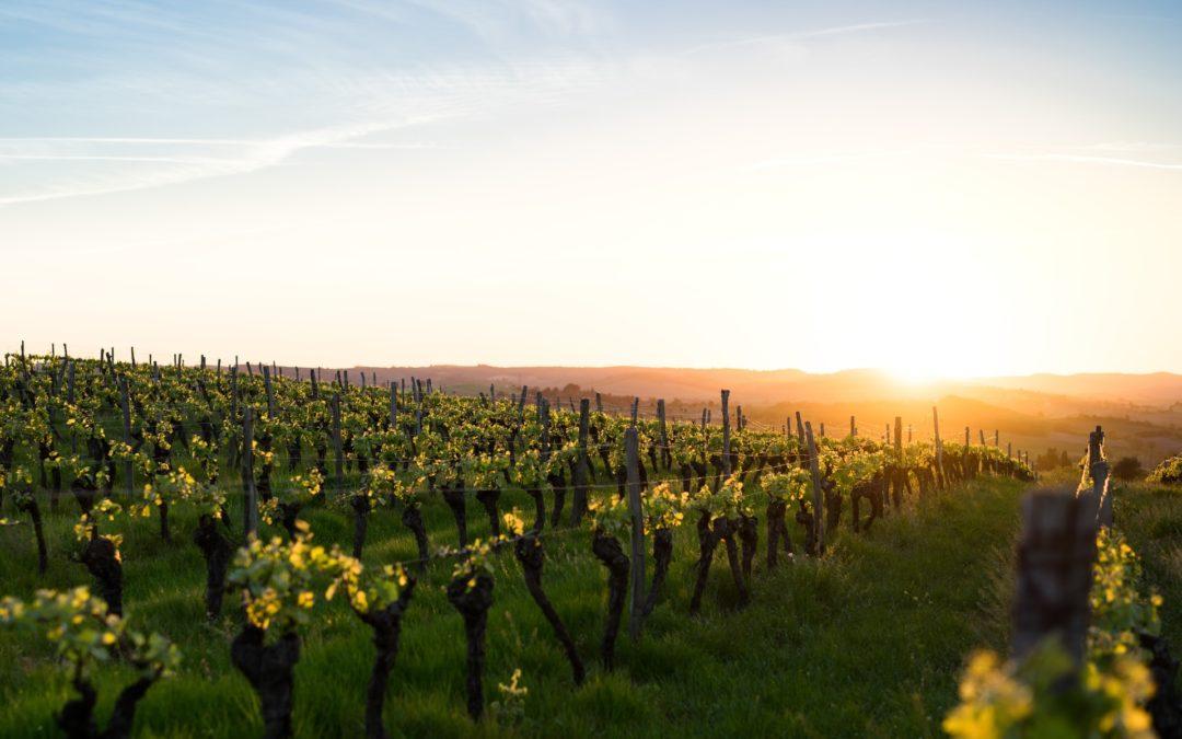 La filiera tracciata del vino – Dal vigneto alla tua tavola